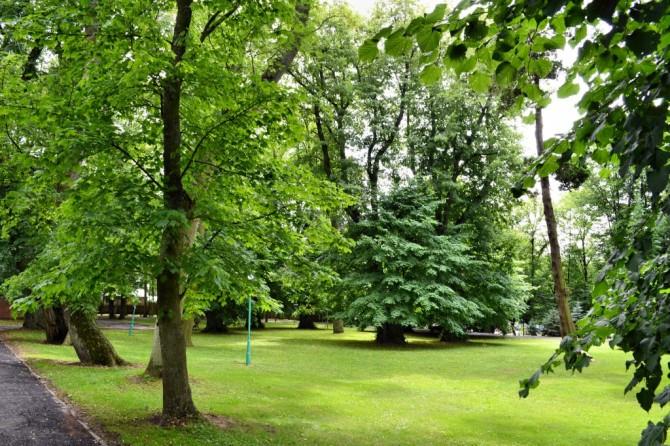 Trzesacz park Dworski