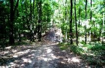 Leśne podjazdy