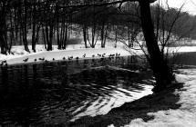 Wiosna pod śniegiem