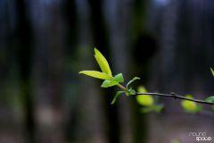 Energia która pachnie – wiosna