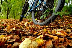 Jesienny szelest