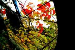 Zapach jesiennych barw